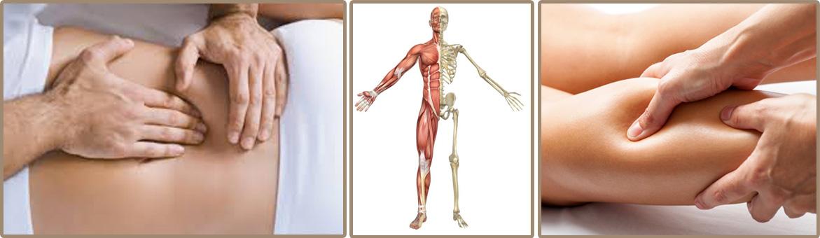 anatomie palpatoire site