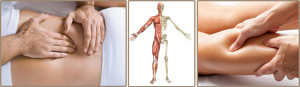 anatomie-palpatoire-site